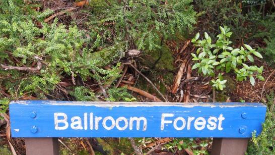 Cradle Mountain National Park