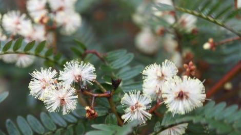 Native flora