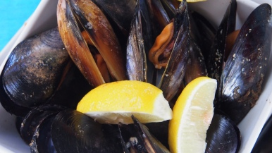 Mussels close up