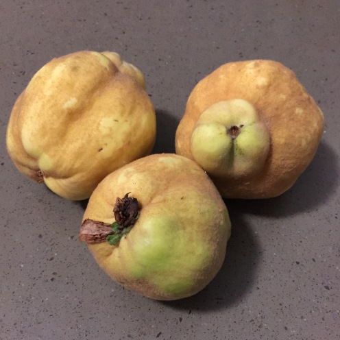 Sure sign of autumn, quinces.