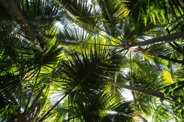 The famous kentia palms.